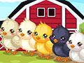 Уход за пасхальными цыплятами