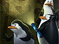 Пингвины Мадагаскара: сокровище золотой белки