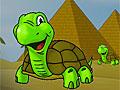 Путешествие черепахи