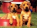 Пазлы с собаками